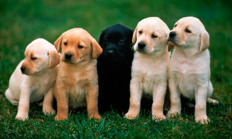 razas-perros.jpg